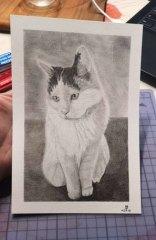 Katze Shiva/Format A5