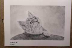 Kleine-Katze